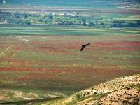 طبیعت زیبای شیلگان دره +عکس