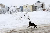 گوشهای از مشقتهای مردم آذربایجان پس از برف +فیلم