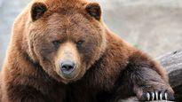 چه بلایی سر شکارچی خرس آمد؟