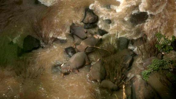 مرگ ۶فیل بر اثر سقوط از آبشاری در تایلند +عکس