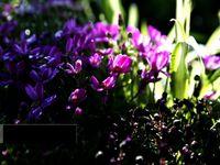 بازار فروش گل و گیاه در بندرعباس +عکس
