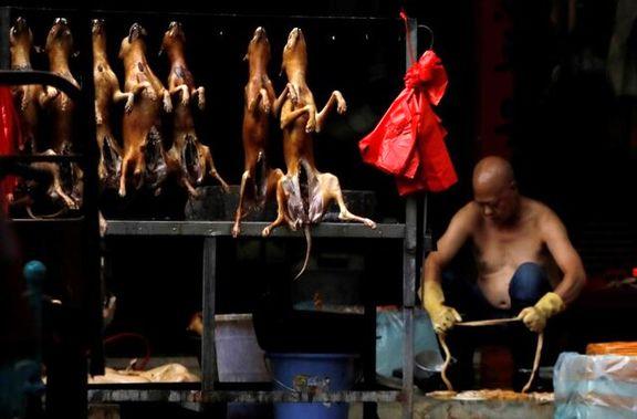 تجارت و مصرف حیوانات وحشی در چین ممنوع شد