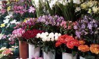 قیمت انواع گل برای شب یلدا چند شد؟