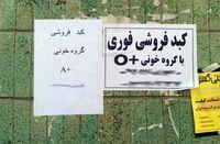 مزایده جان برای نان/ بازار پررونق خرید و فروش کبد در ایران