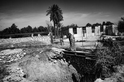 خشکسالی در بوشهر +تصاویر