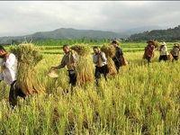 کشاورزی؛ آلودهکننده بزرگ محیطزیست