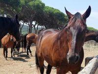اروپا مشتری کشمش و قزل آلای ایران/ مجوز واردات اسب از ایران صادر شد