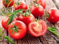 کاهش چشمگیر تولید سیب زمینی و گوجه فرنگی
