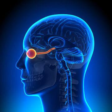 عصب بینایی