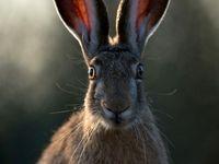 رویارویی خرگوش با دوربین +عکس