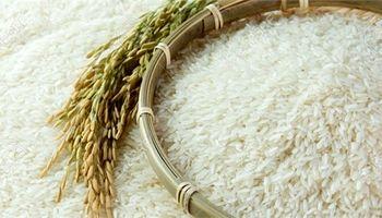 قیمت برنج در تهران باید حداکثر ۲۳هزار تومان باشد