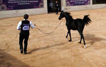 اسب ایرانی
