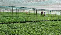 چین برای توسعه بخش کشاورزی چهکرد؟