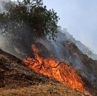 جنگلهای گچساران در آتش سوخت