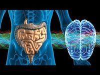 باکتری هایی که بر تکامل مغز تاثیر می گذارند