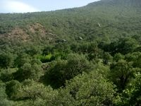 کشف جسد مرد ناشناس در دلِ جنگل نوشهر