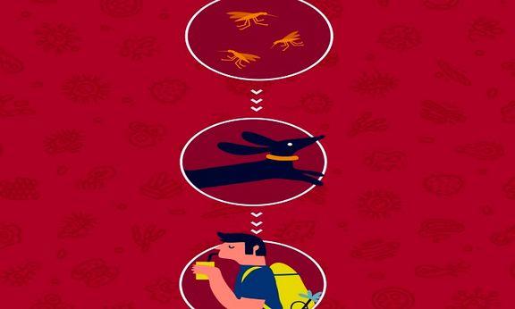 درباره بیماریهای زونوتیک