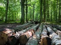 زنگ خطر قاچاق چوب در جنگلهای کشور
