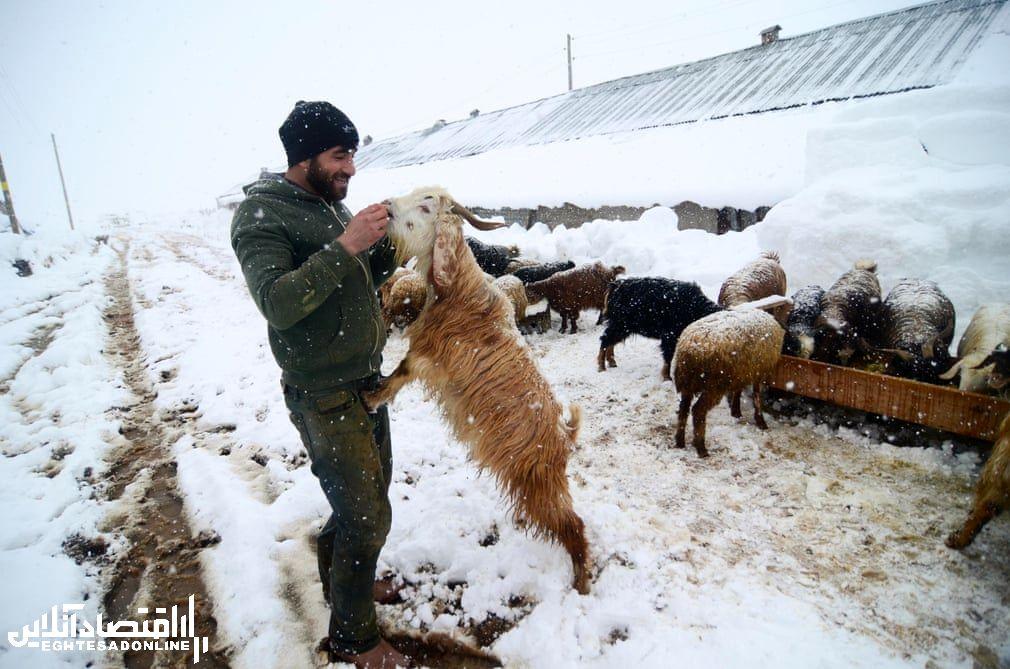 برترین تصاویر خبری ۲۴ ساعت گذشته/ 19 دی