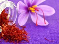 معامله زعفران در بورس کالا عاملی برای کاهش واسطهگری و افزایش قیمت منطقی