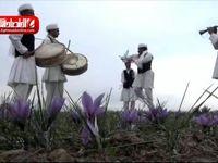 تحقق رویای زعفرانکاران در بورس کالا/ کشاورزان از تجربه کشف قیمت زعفران در بورس کالا میگویند