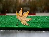 برگهای خزان زده - سنندج +عکس