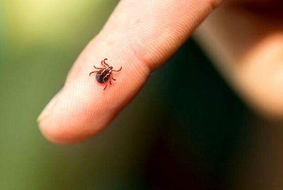 مردم مراقب تب کریمه کنگو باشند