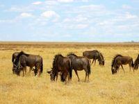تصاویری دیدنی از طبیعت و حیات وحش نامیبیا