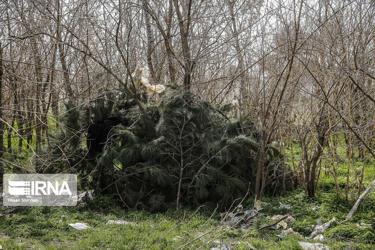 درخت خواری