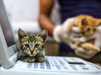 پناهگاه گربههای جنگزده سوریه +تصاویر