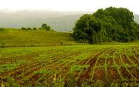 کلیات لایحه حفاظت از خاک تصویب شد