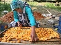 آموزش زنان روستایی برای فعالیت در استارتاپها