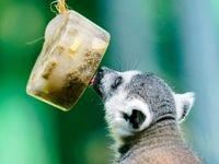 تفریح تابستانی حیوانات در باغوحش +تصاویر