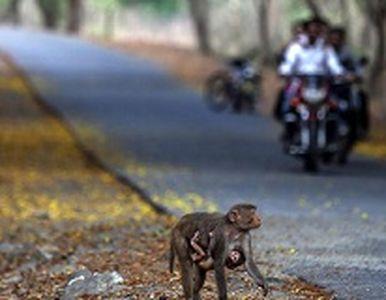 عجیب و دیدنی از دنیای حیوانات +عکس