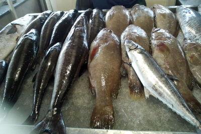 افزایش چشمگیر قیمت ماهی +جدول