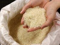 برنجهای قاچاق سالم نیستند