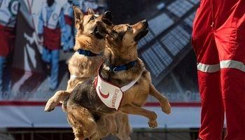 اعزام سگهای تجسس به محل حادثه مترو