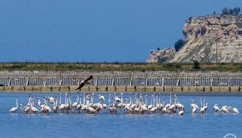 بزرگترین جزیره جوجه کشی در دنیا +تصاویر