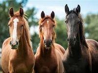 شرط تجارت اسب
