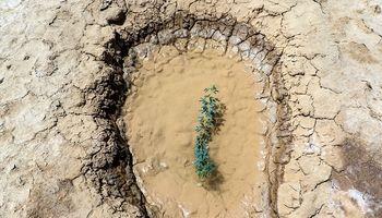 مشکل ریزگردهای اهواز را این گیاهان برطرف میکنند +عکس