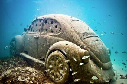 موزهای در اعماق دریا +تصاویر