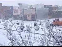بارش برف در سنقروکلیایی کرمانشاه +فیلم
